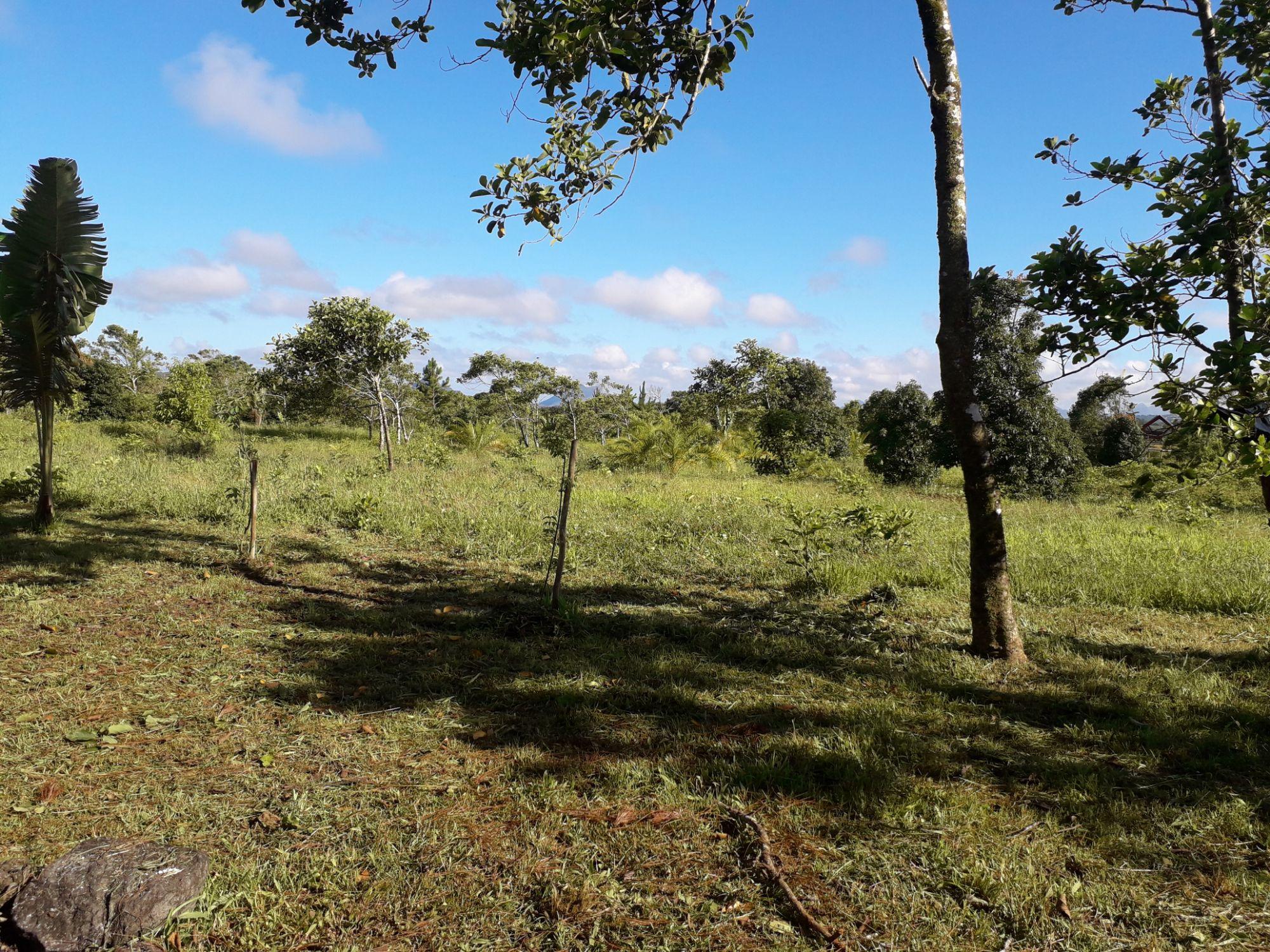 Ce magnifique terrain agricole de 10 arpents 16 se situe à Mare Longue. Idéal pour un investissement ou autres projets.