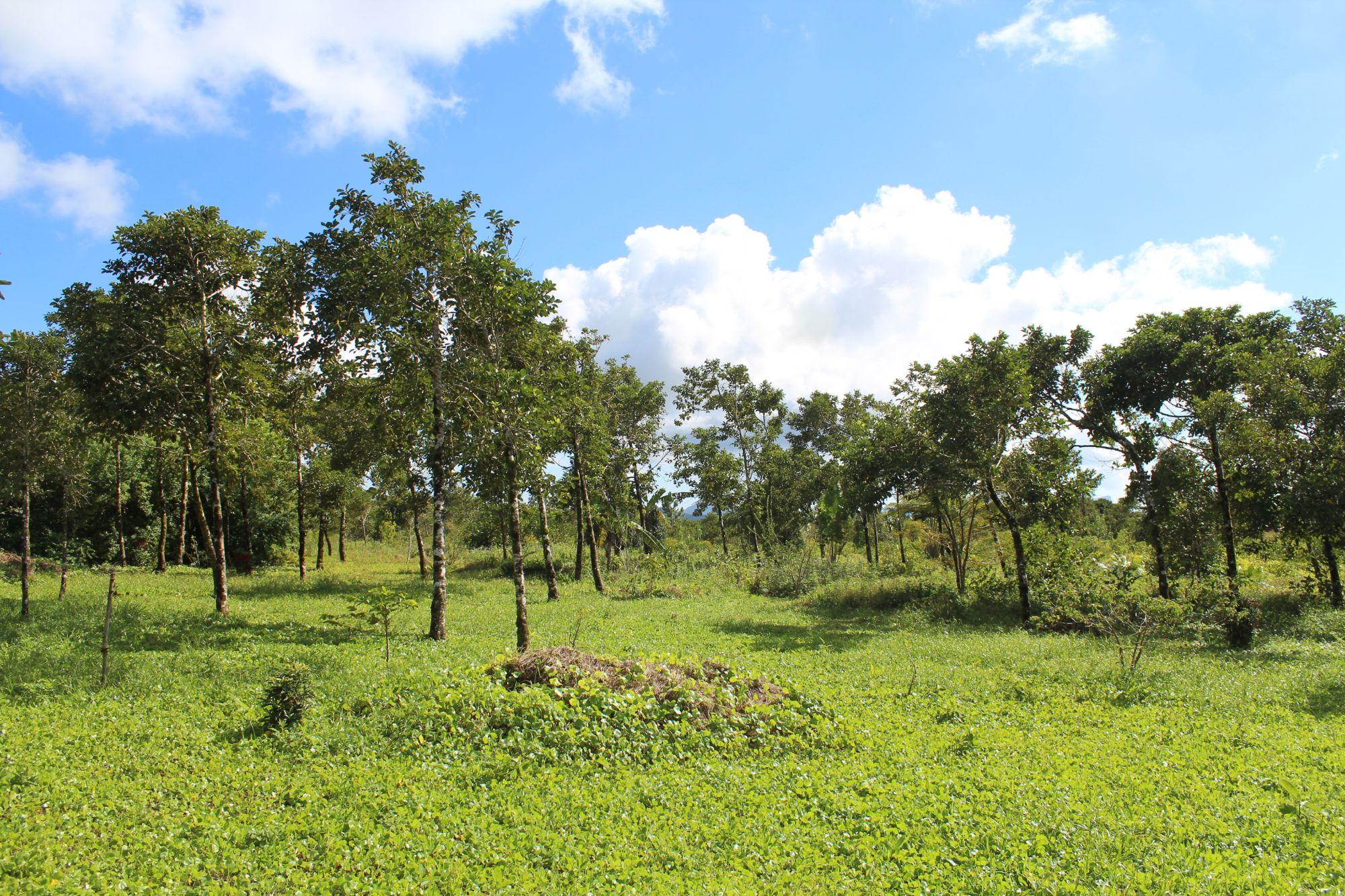 Ces différentes portions de terrains agricoles sont situées à Mare Longue. Idéal pour un investissement ou autres projets.